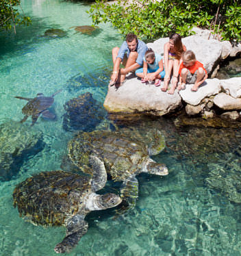 tortugas-xcaret